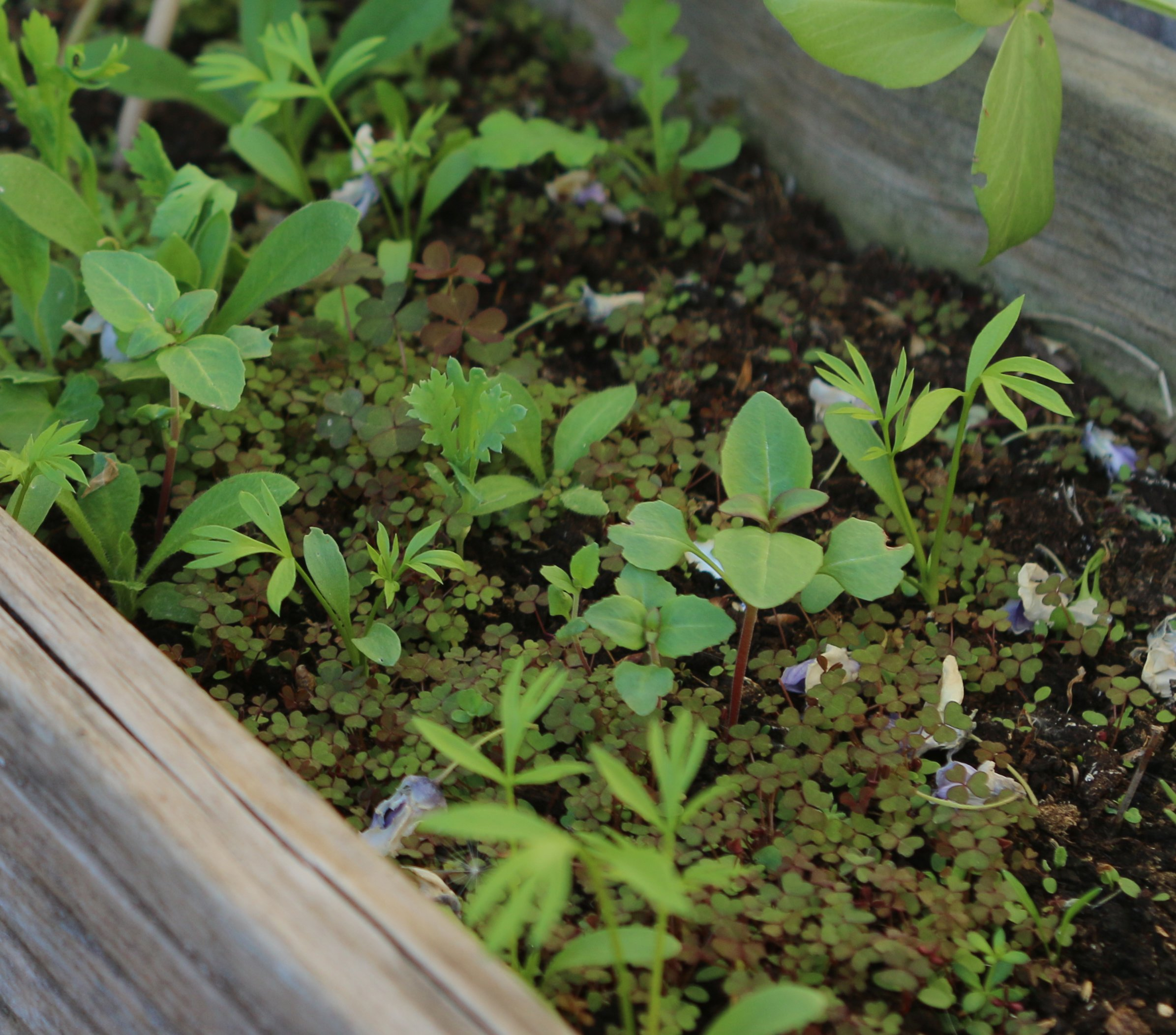 biodiversity area — wildflower seedlings
