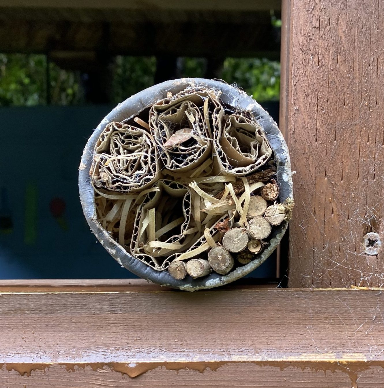 A bug hotel made of sticks and bamboo in a plastic bottle