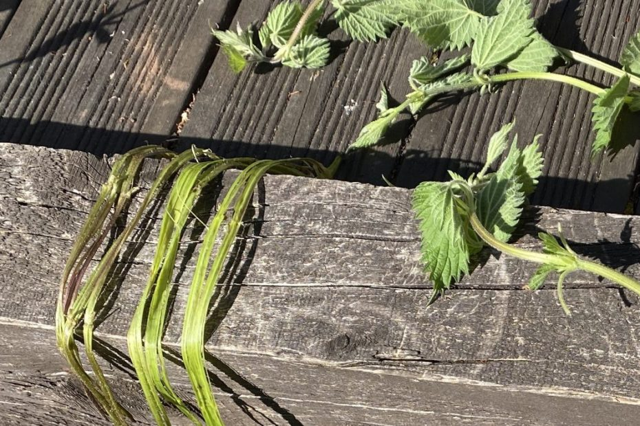 Nettles and the strings made from them