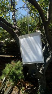 pollution catcher in a tree