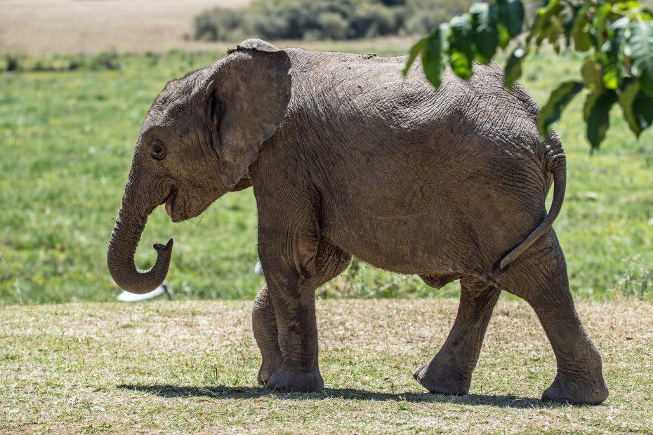 face your carbon elephant